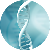 Plasmid DNA Image